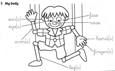 preschool coloring pages body parts free coloring pages of my body