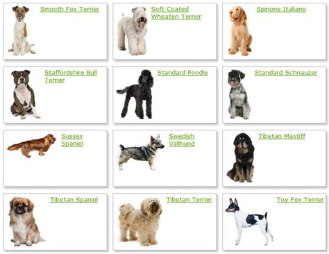different types of breeds list of different types dogs breeds picture litle pups