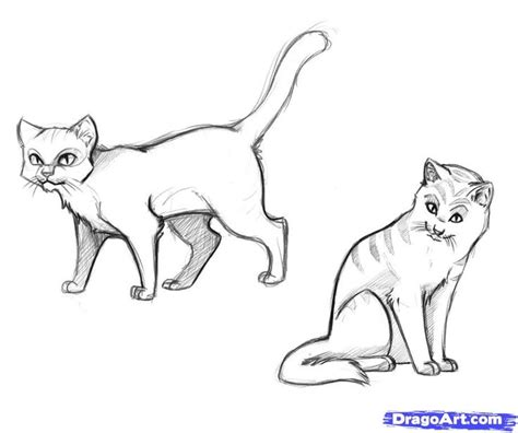 doodle how to make warrior realistic cat drawings how to draw warrior cats step by