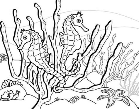 hard seahorse coloring pages get this printable seahorse coloring pages online 34394