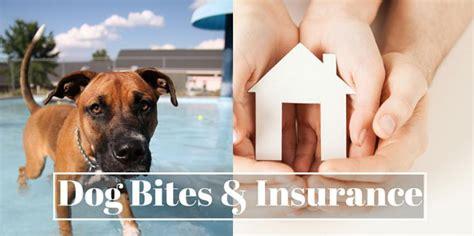 bite insurance bites and insurance