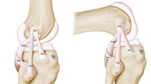 surgeons discover knee ligament all again