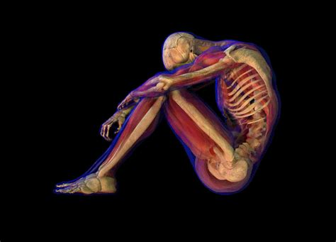 Physiology Images physiology review questions