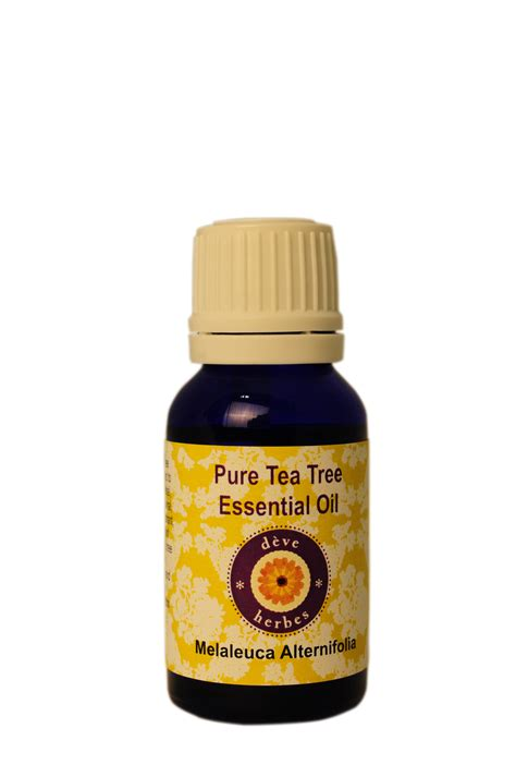 Melaleuca Alternafolia Tea Tree 15 Ml 1 tea tree essential melaleuca alternifolia 15ml in india shopclues