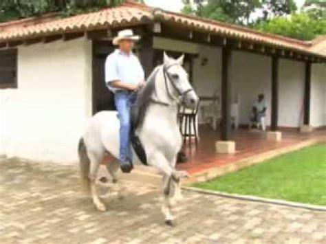 caballo de la sabana youtube estelar de providencia video promocional 2010 rey de la