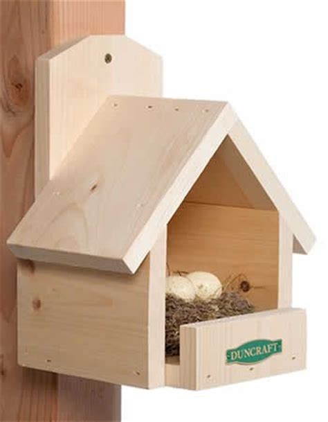 robin bird house