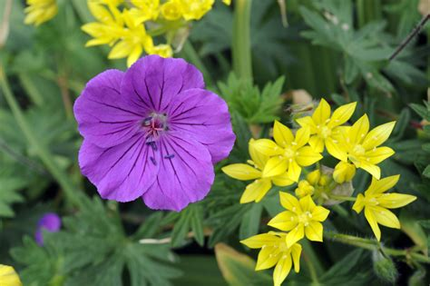 stauden die den ganzen sommer blühen mit heimischen stauden gestalten gartenzauber