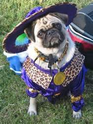 southern nevada pug rescue wheel archives accessvegas insider vibeaccessvegas insider vibe