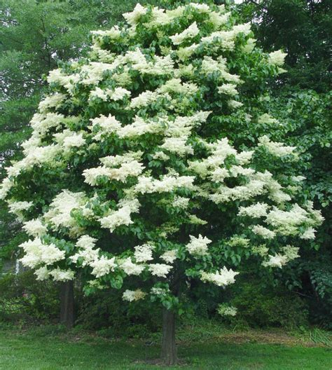 decorative small trees for landscaping