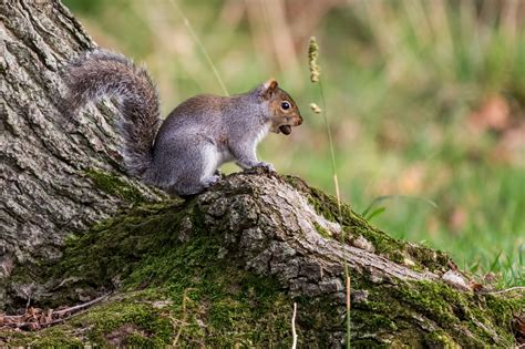 high resolution picture of wood image of moss squirrel