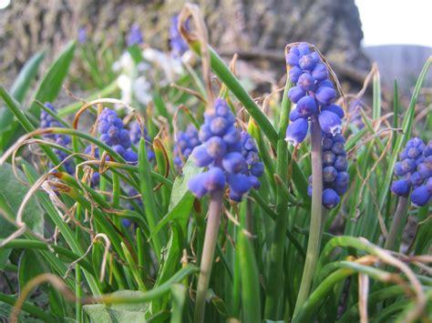 early spring flowers bobbi s blog