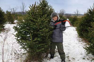 where to cut your own christmas trees in the new york