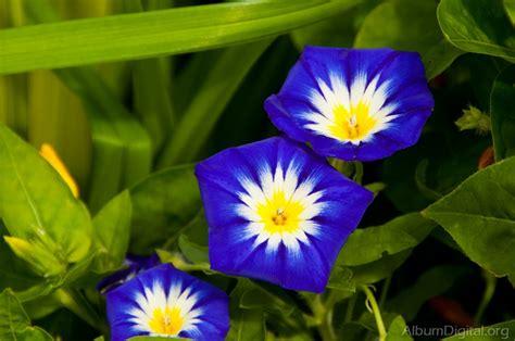 flores lilas imagenes flores lilas