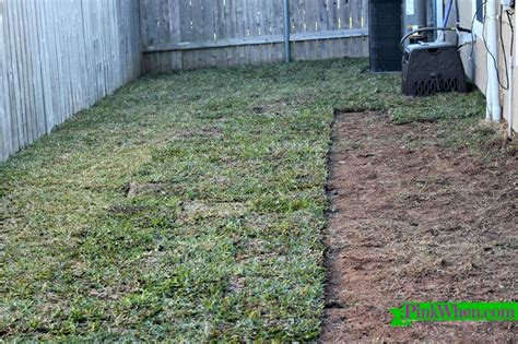 how to lay sod paperblog