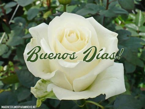 imagenes muy bonitas con rosas bellas im 225 genes de buenos d 237 as con rosas preciosas