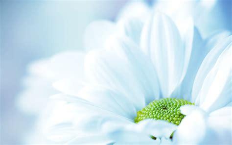 Wallpaper Biru Lembut | tips tips kesehatan untuk anda 30 wallpaper bunga paling