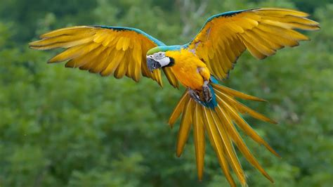 big colorful bird colorful bird parrot flying on sky hd wallpaper hd