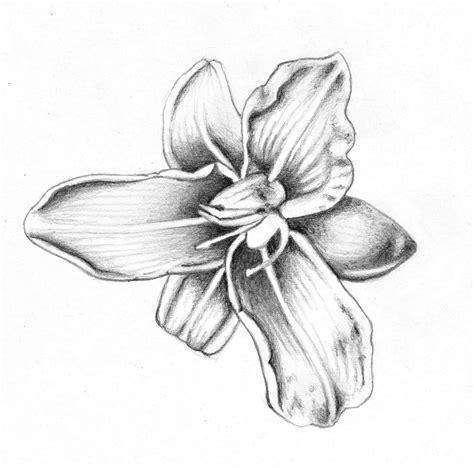 Drawings Of Flowers by Flower Drawing