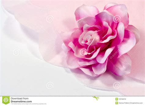 Roses With Tissue Paper - and tissue paper royalty free stock image image
