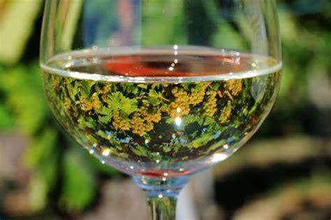 come calcolare le kcal di un alimento calorie di un bicchiere di vino