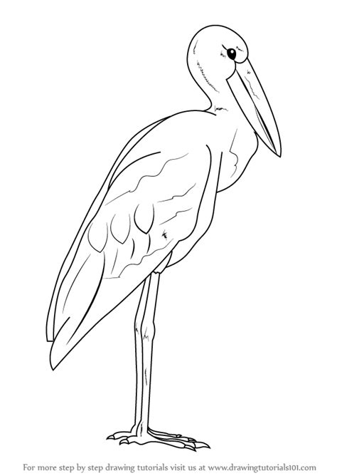 how to draw sea birds learn how to draw an asian openbill seabirds step by