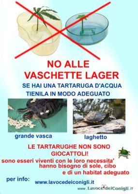 alimentazione tartarughe di terra piccole tartarughe domestiche quello che si deve sapere