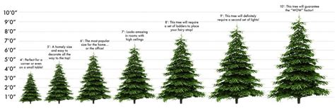 awesome picture of christmas tree identification perfect