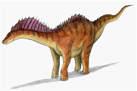 amargasaurus pictures facts  dinosaur