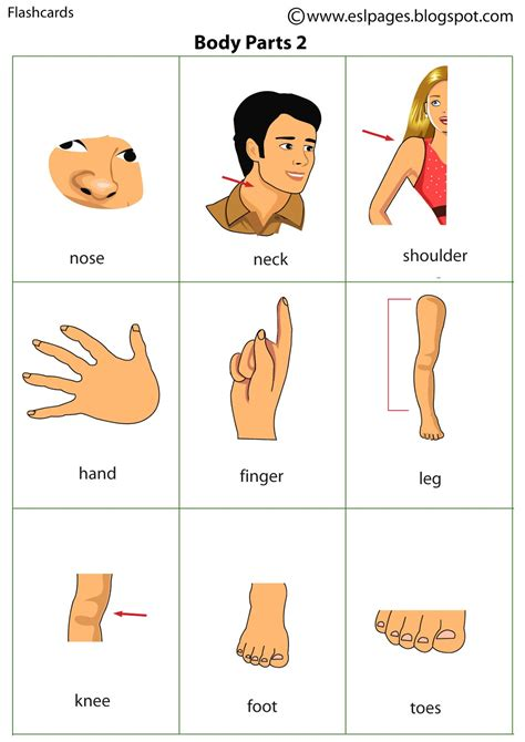 printable body part flashcards for toddlers bodyparts search results calendar 2015