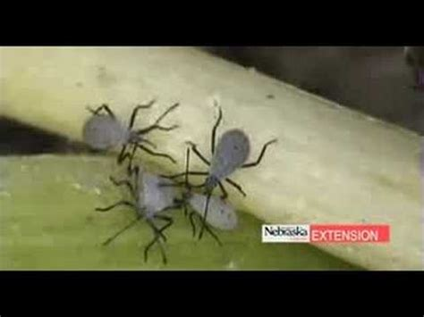 Backyard Pests by Common Garden Insects