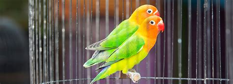 lovebirds as pets supplies care petsmart