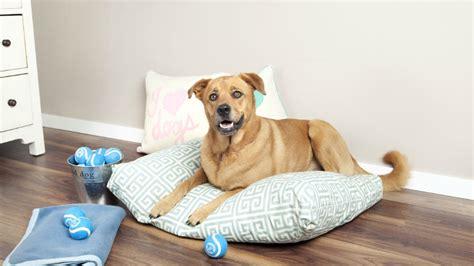 cuscino per cani grandi dalani cuscini per cani grandi comfort per la cuccia