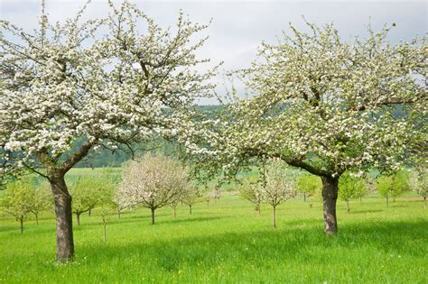 best time for spraying trees when to spray fruit trees - Spraying Fruit Trees