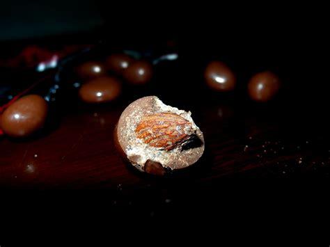 Baru Mesies Kopi Coklat Butiran 650gr foto coklat butir houten jeprat jepret fotografi