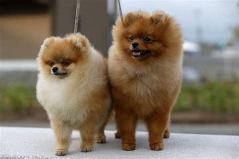 raza perros peque os pelo corto videos de chicos con mucho pelo desnudos gratis adanih