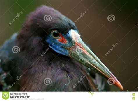 birds with colorful beaks bird colorful beak royalty free stock photos