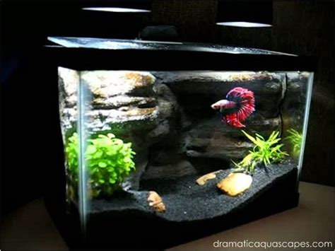 diy aquascape pinterest the world s catalog of ideas