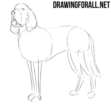 How To Draw A Drawingforall by How To Draw A Bloodhound Drawingforall Net