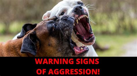 signs of aggression in dogs warning signs of aggression or biting