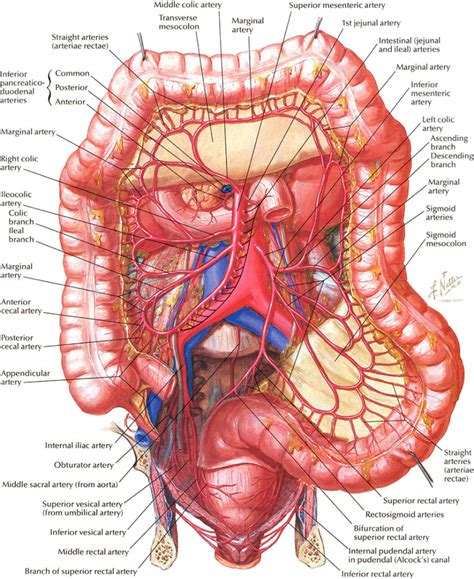 diagram of bowel small intestine anatomy diagram human anatomy diagram