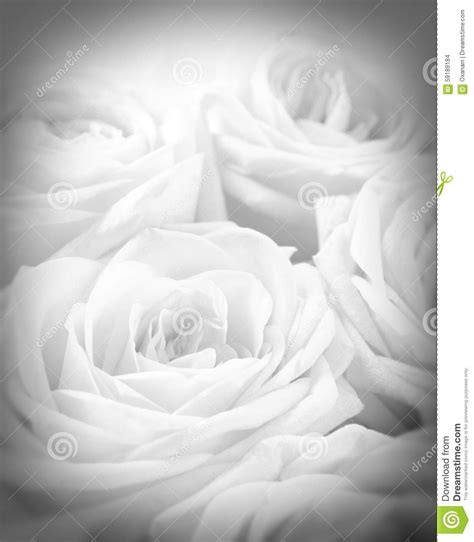 Wedding Background Black And White by Beautiful White Roses With Vignette As Wedding Background