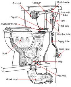 How Does Plumbing Work by How To Fix A Toilet