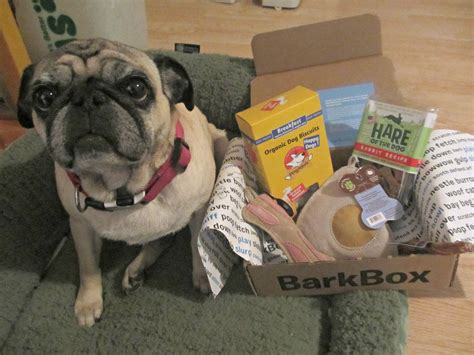 barkbox for puppies barkbox review small march box emily reviews