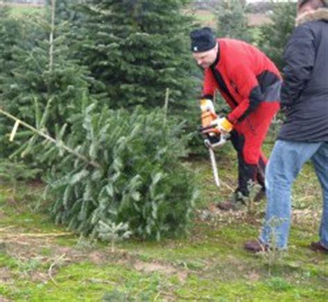 weihnachtsbaum klassiker in hessen begehrt proplanta de