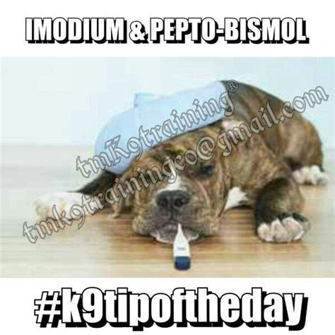 imodium for dogs 1000 ideas about pepto bismol dosage on safety your and