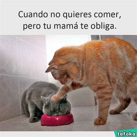 imagenes graciosas de gatos the gallery for gt memes de amigos
