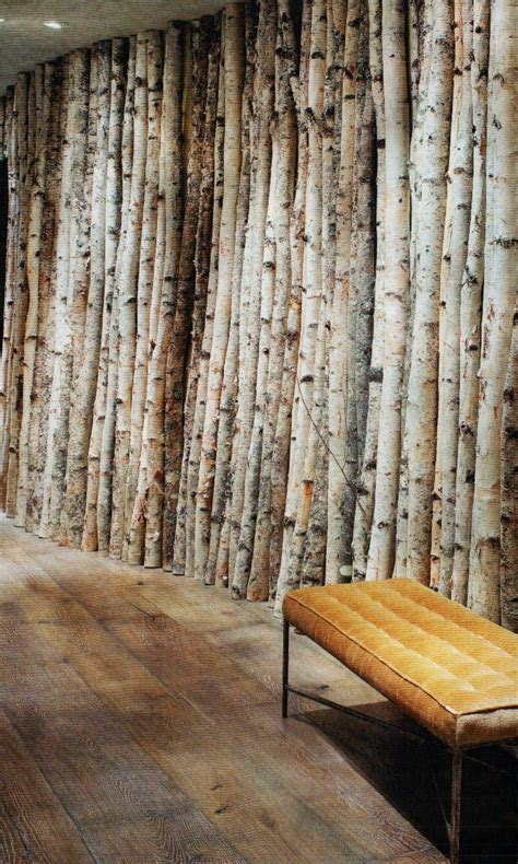 birch bark tree trunk wall  would love to write here. Need