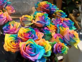 200 rare rainbow rose flower seeds your lover multi color plants home garden ebay