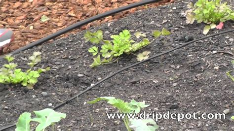 watering systems for vegetable gardens how to setup a drip irrigation system for a small