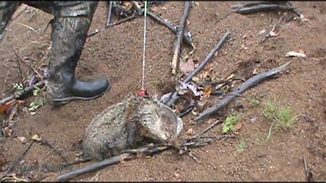 best groundhog kill with a bow
